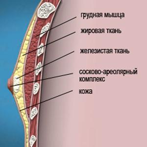 chest-anatomy_ginekomostiya